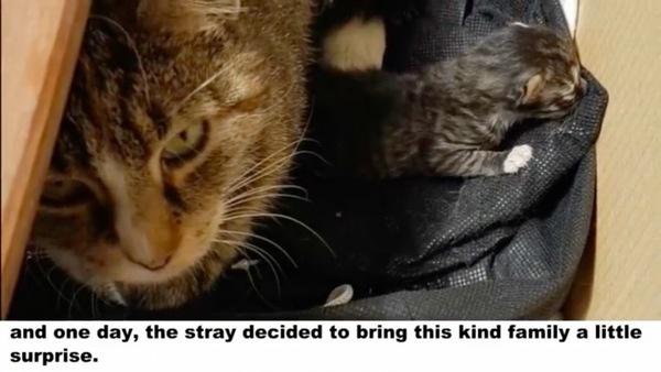 子猫を連れて来たママ猫