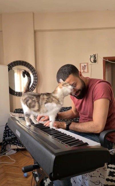 ピアニストと猫