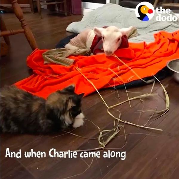 ドーラとチャーリー