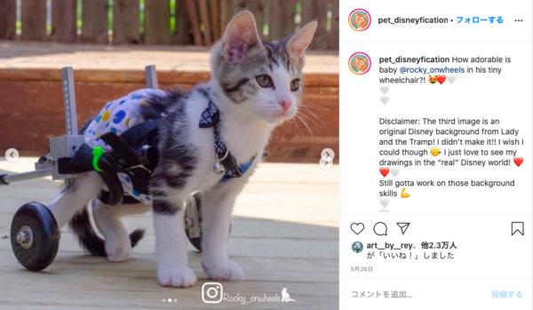 車椅子の子猫