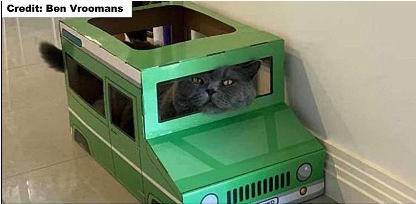 猫用ジープで寝る猫