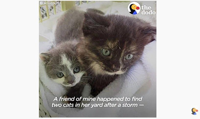 捨てられた当時の子猫2匹