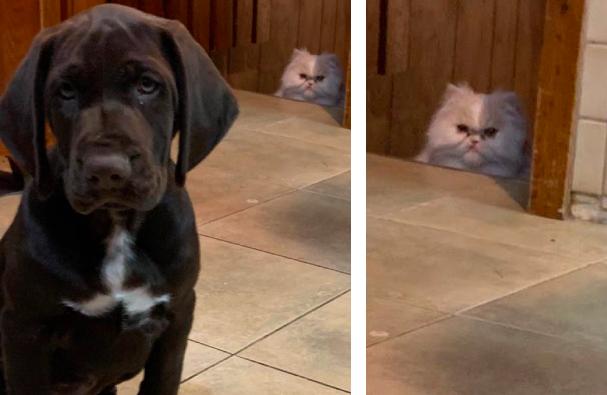 犬を睨む猫