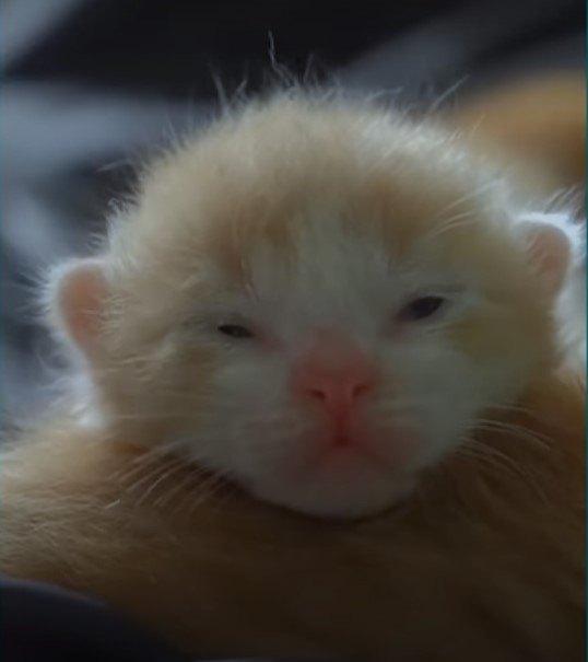産まれた子猫