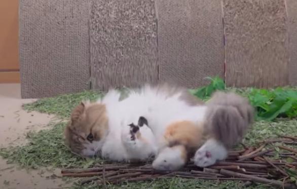 木をかじる猫