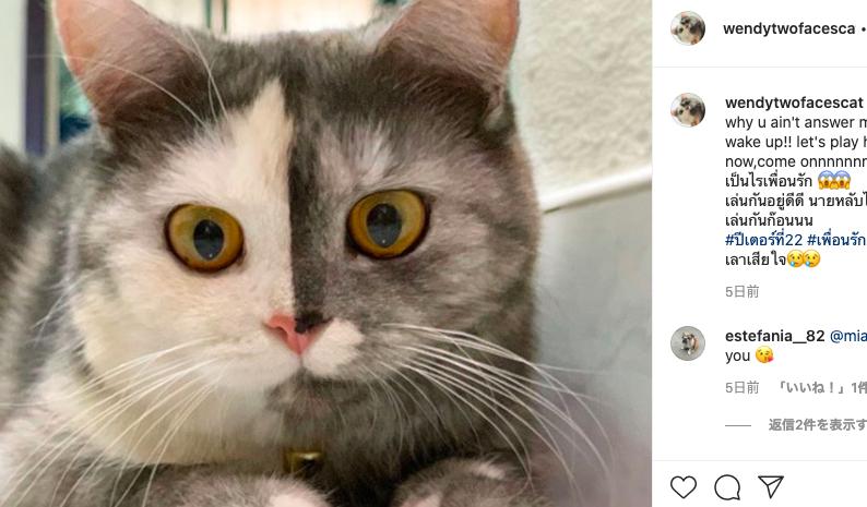 ゴキブルを見る猫