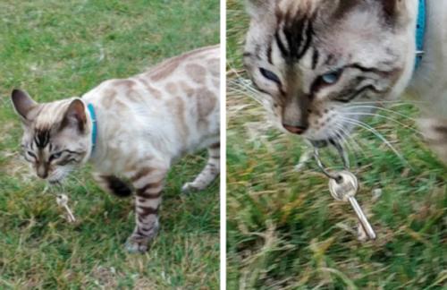 鍵を持って帰ってきた猫