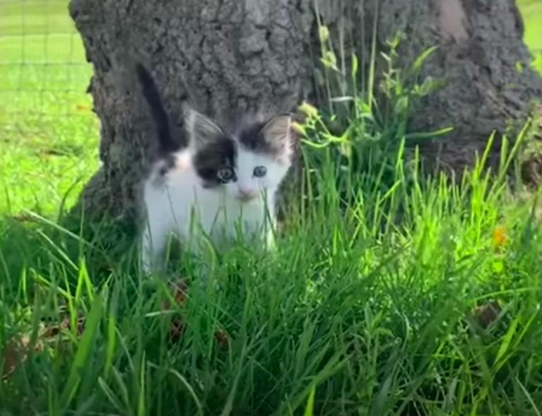 公園にいた子猫