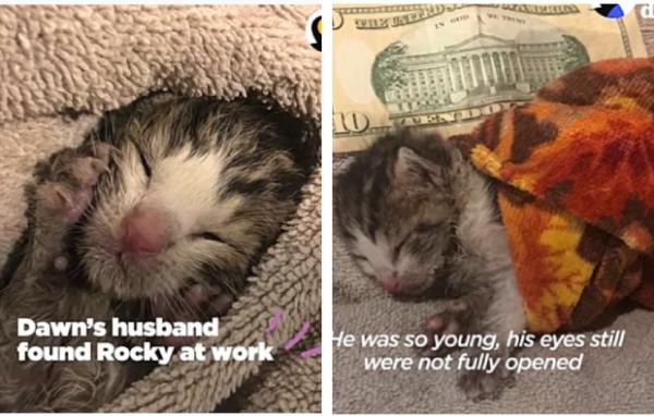 保護されタオルで包まれる子猫