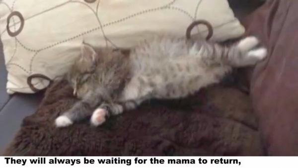 寝転がる子猫