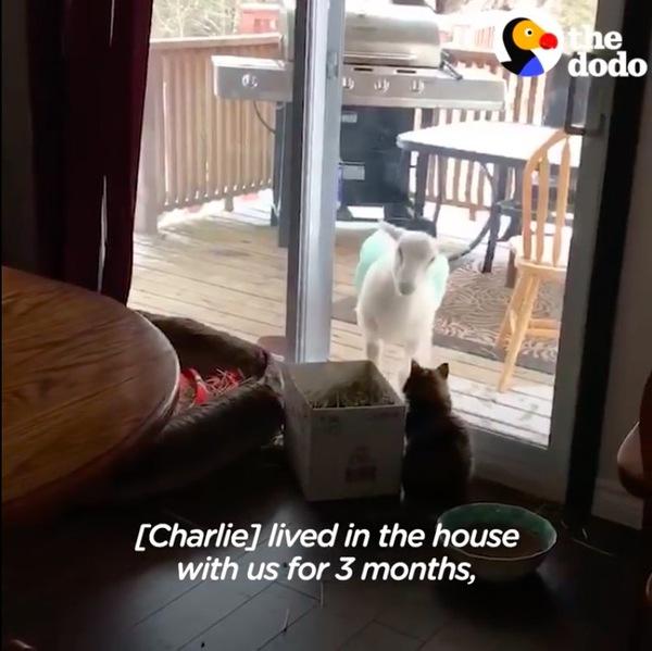 ドーラに会いに来たチャーリー