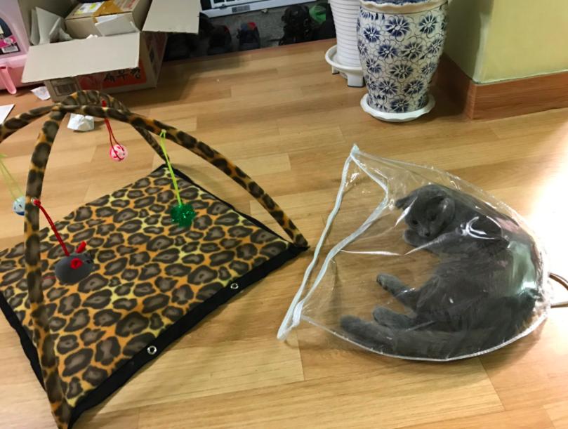 おもちゃよりも袋が好きな猫