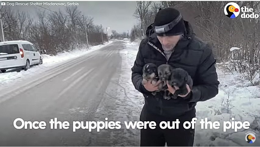 子犬を排水管から救助