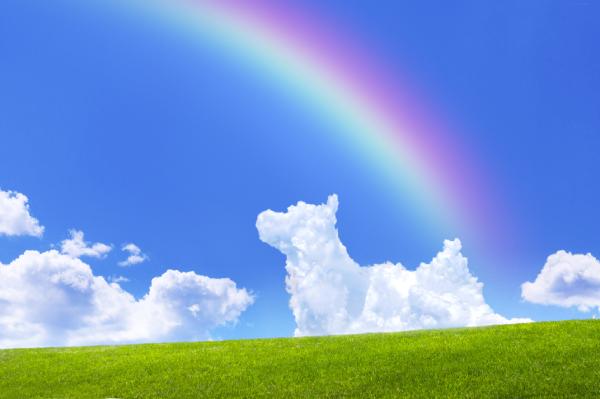 犬の雲と虹