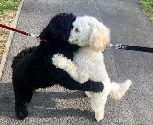 抱き合う二匹の犬
