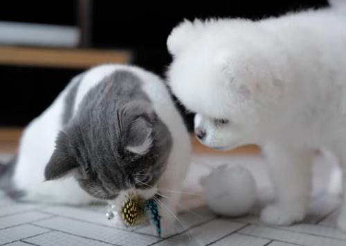 おもちゃで遊ぶ犬と猫