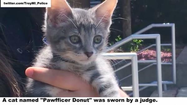猫巡査ドーナツ誕生