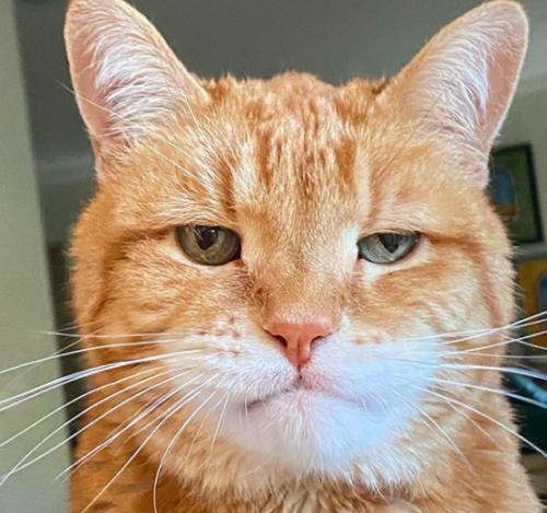 憂鬱な顔の猫