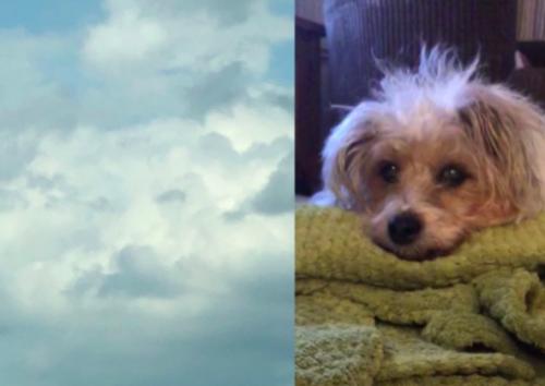 雲の中に現れた愛犬
