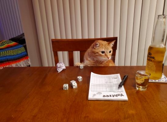 ヤッツィーを嗜む猫