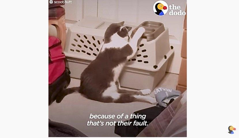 保護当時の足に障害がある猫