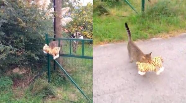 トラのぬいぐるみを運ぶ猫