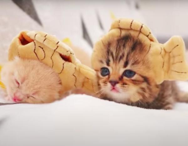 たい焼きの帽子をかぶる子猫