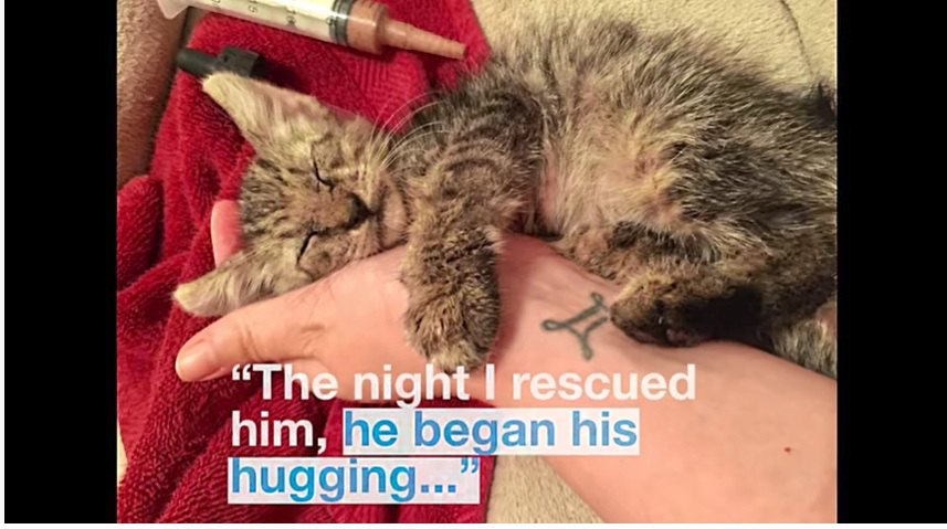 女性の腕を抱きしめる子猫