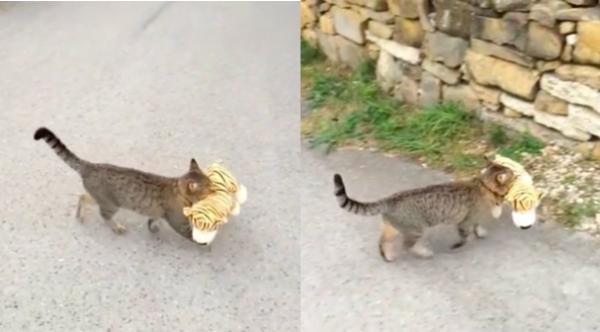 道を横断する猫