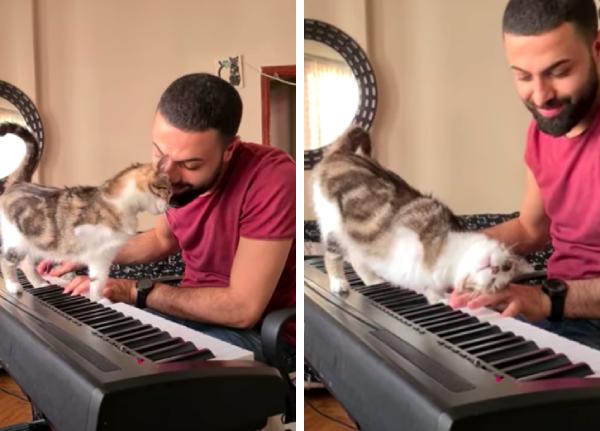 ピアノの音色にうっとりする猫