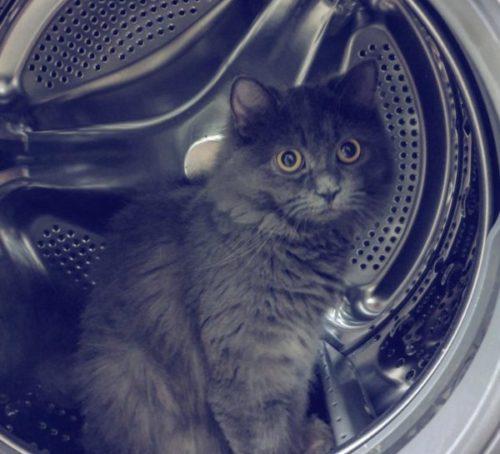 洗濯槽の中にいた猫