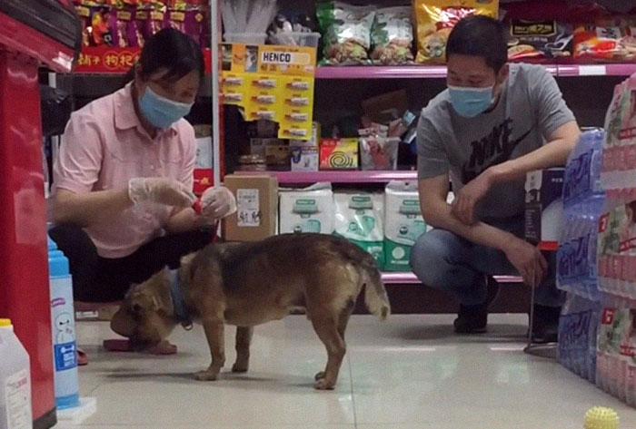 売店の女性と犬