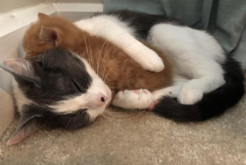 子猫を抱きしめる先住猫