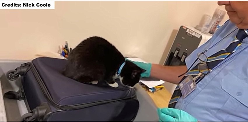検査室で発見された愛猫