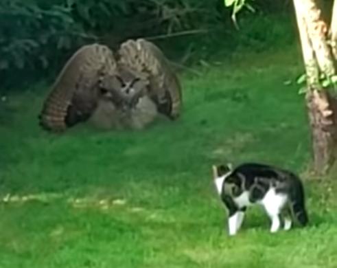 猫を威嚇するふくろう