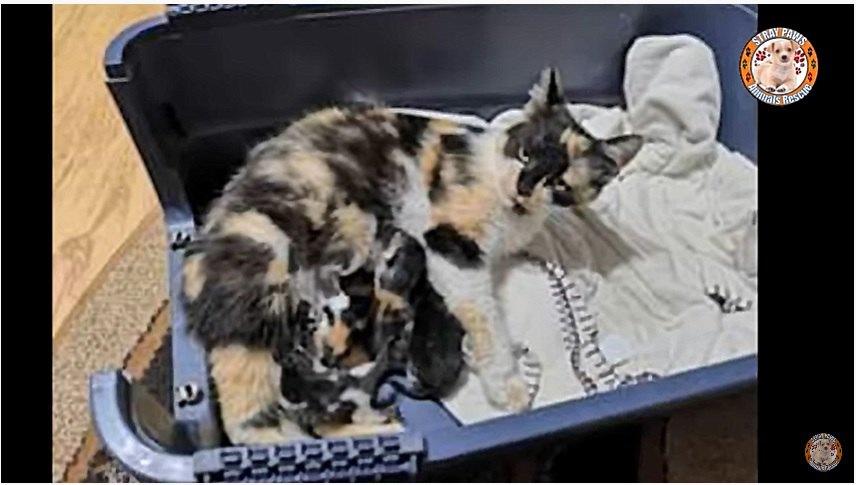 家の中で授乳をする母猫