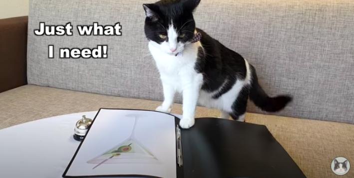 カクテルをオーダーする猫