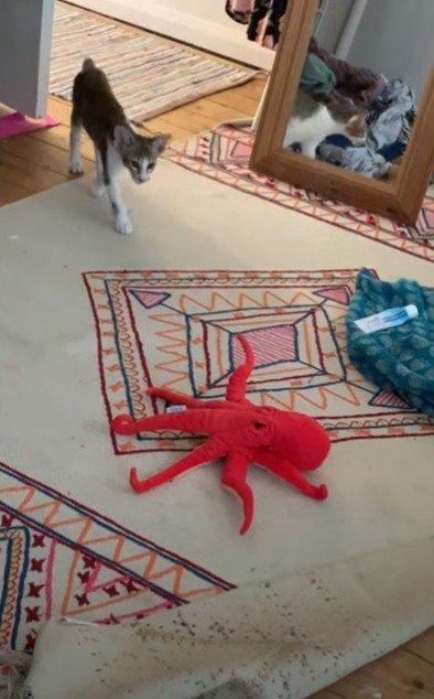 タコのおもちゃを見つけた猫