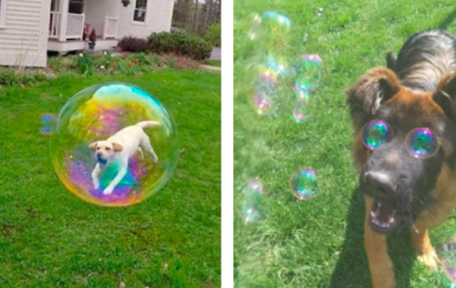 シャボン玉と犬の奇跡の一枚
