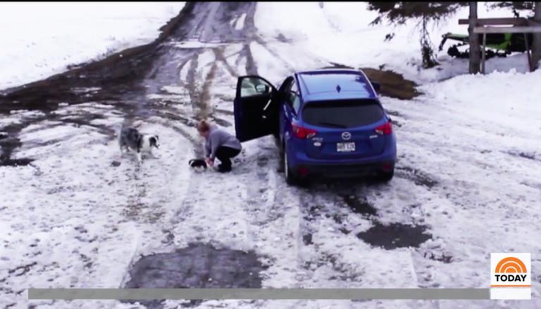 車に轢かれそうな猫を助けた犬