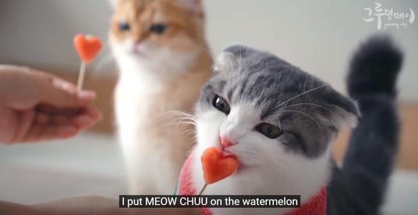 スイカの切れ端を食べる猫