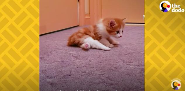 下半身麻痺の子猫