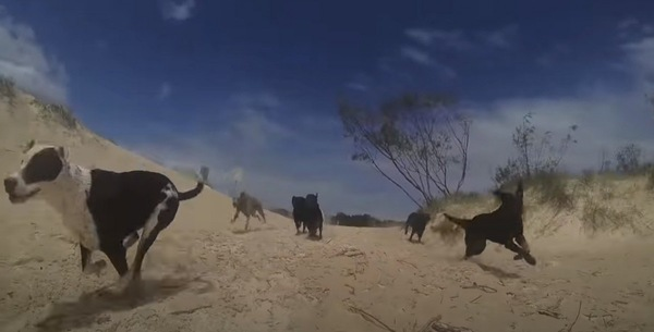 海岸を走る犬たち