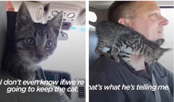 車の中に乗り込む猫
