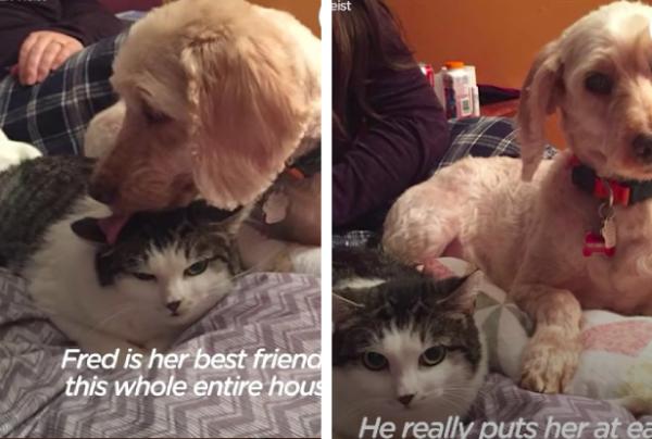 猫と仲良しの犬