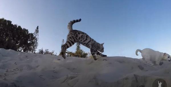 犬と追いかけっこをする猫