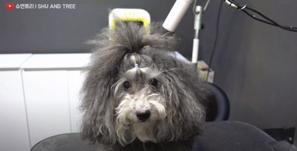 トリミング台の上の犬