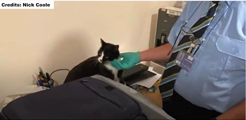 検査員に撫でられる愛猫