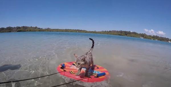 サーフボードに乗る猫