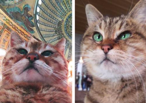 トルコの博物館で働く猫